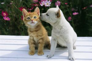 仲のよすぎる犬と猫