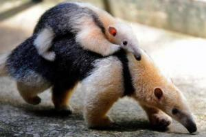 かわいい動物画像たちの画像