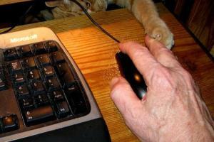 猫の不意打ちのテクニックの写真