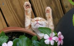 眠りについた可愛い猫の画像が可愛すぎる写真