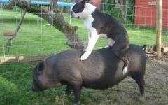 動物の上に動物が乗ると破壊力抜群になる写真