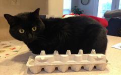 どんな隙間にもフィットしてしまう猫の写真
