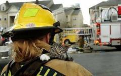 人間に救出された瞬間の猫