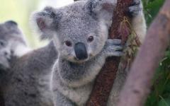 見ていると幸せになれる可愛い動物たちの写真