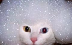 ネコの入浴シーン