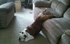 家具の間にはまっている犬と猫の可愛い写真