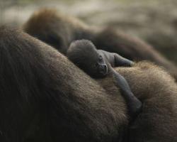 野生の生き物が本当に美しすぎた写真