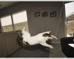 空中を飛行する猫たちの可愛い写真