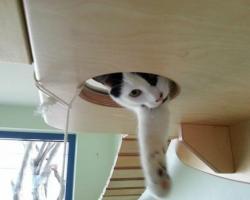 猫の遊び場の写真
