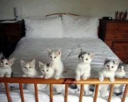 身震いするほど可愛い猫の画像