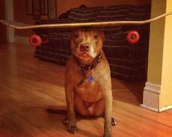 すごいバランス…頭にいろんな物を載せてもピタッとバランスをとる犬