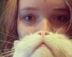 かわいい愛猫を「ヒゲ」にして遊ぶ人々の写真
