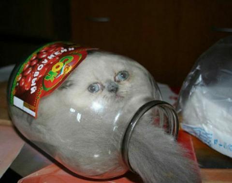 猫が可愛く液体化している可愛い写真