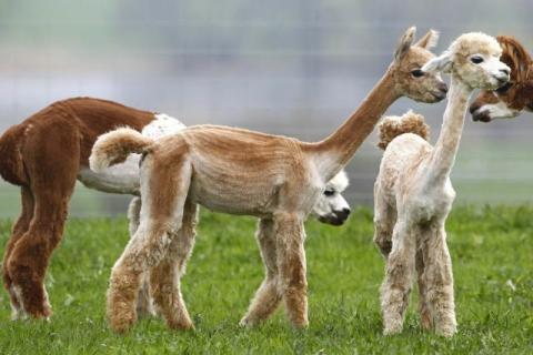 見ているだけで興奮してくる可愛い動物の画像