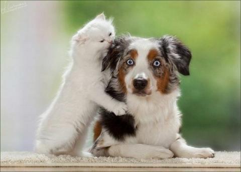 癒しの動物たちの写真
