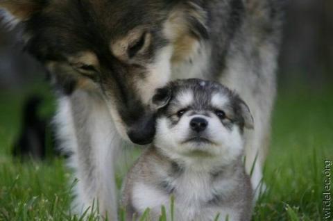 本当に可愛すぎて癒される子犬の写真