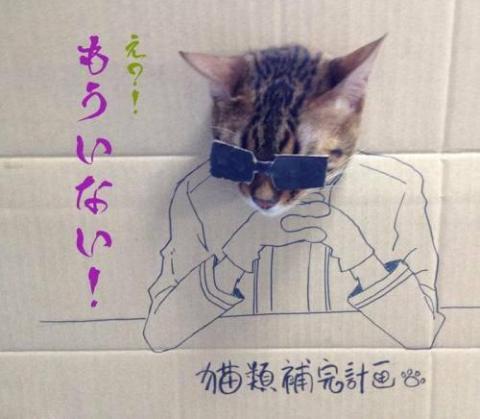 猫がダンボールから顔を出したイラスト画像
