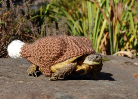 寒くなってきたから亀にセーターを着せてみた写真