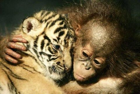 本当に仲良しの可愛い動物たちの写真