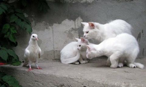 猫に狙われた完全ロックオンされた写真