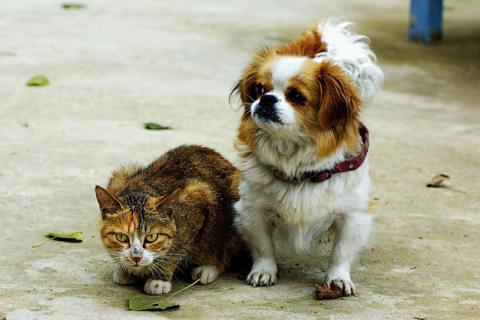 犬と猫が仲良しの可愛い写真
