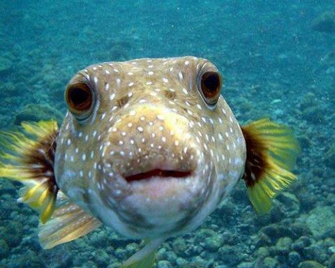 ちょこっとブサイクだけど愛嬌があって美しい魚の写真