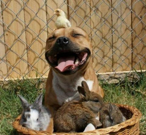 癒しの可愛い動物画像
