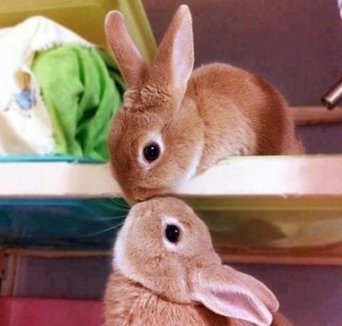 抱きしめたくなるほど可愛い動物の画像