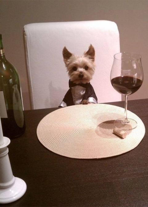 カッコイイポーズをとる動物の写真