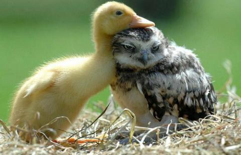 違う種類の動物が仲よくしている可愛い写真