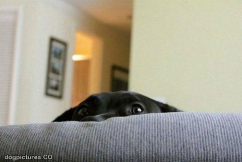 犬さんは、隠れるのが苦手!!と実感する写真