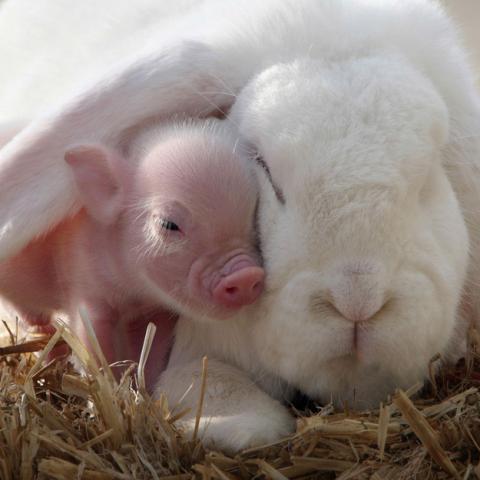可愛い子豚さんの写真