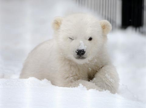 可愛すぎる動物の赤ちゃん画像