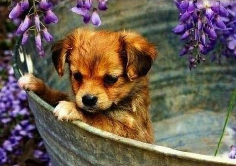 見ているだけで幸せになれる可愛い子犬の画像が集まった写真