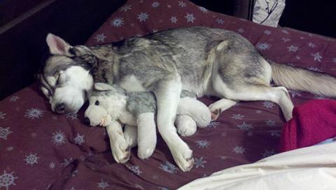 ぬいぐるみと眠る可愛い動物たちの写真