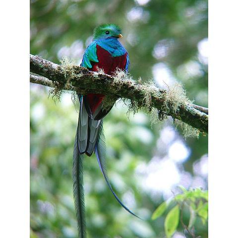 とにかく可愛い鳥の画像が集まったよ!写真