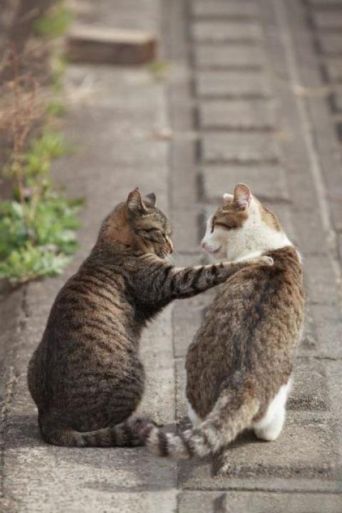 可愛すぎて一緒に笑っちゃう動物たちの写真