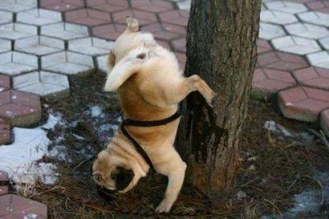 犬や猫が立ち上がっている可愛い写真