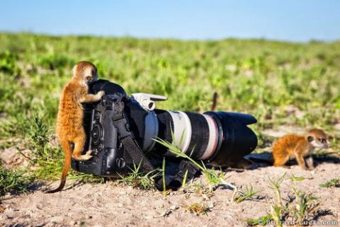 自分を「ニンゲン」だと思いこんでる動物たちの写真