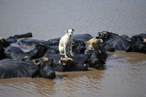 どうしたらいいんだろう?途方に暮れる動物たちの写真