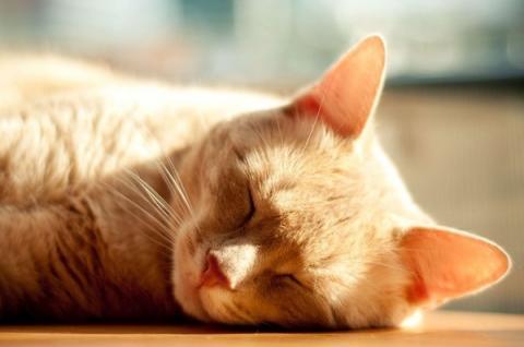 猫の寝顔がどうしてこんなに可愛いのかと思える写真