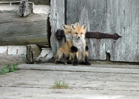 かくれんぼする動物が可愛すぎる写真