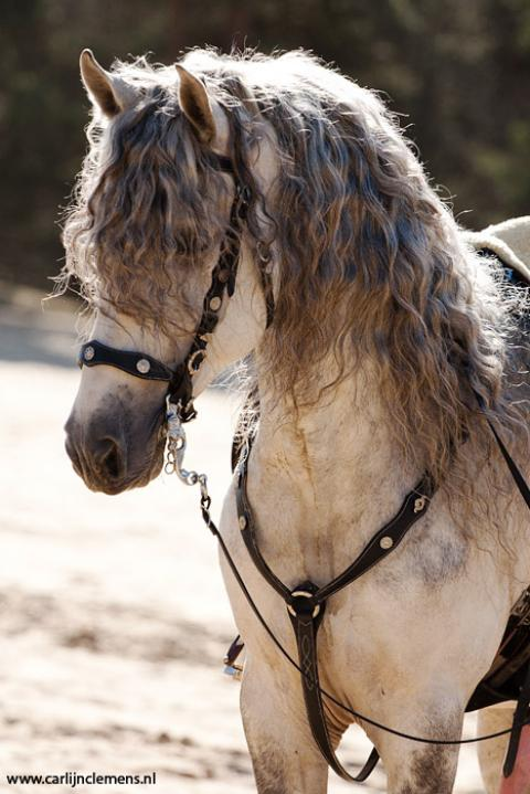 お前らよりもサラサラヘアの馬の写真