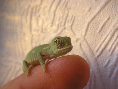 手乗り動物や虫たちが可愛い写真