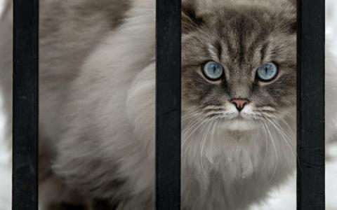 正面ドアップな動物たちの写真