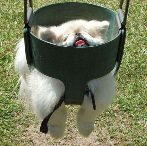 ものすごくだらしない犬の表情の写真