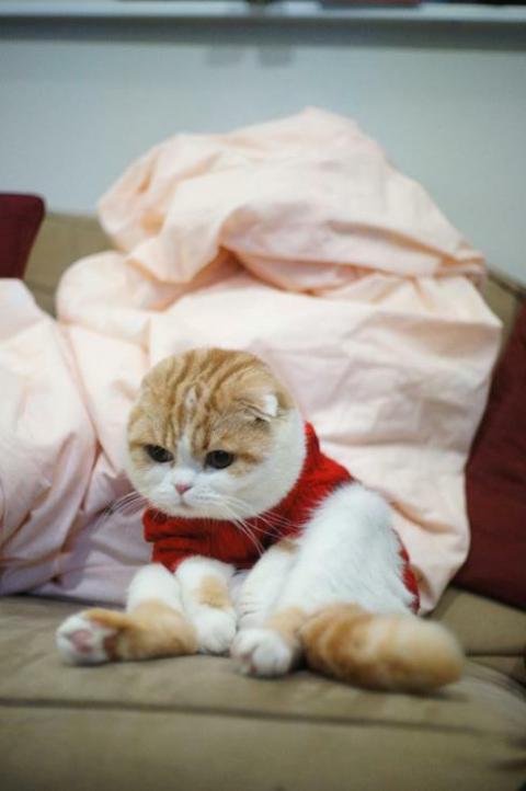コスプレが似合いすぎるオシャレ犬・猫の写真