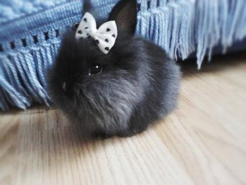 小さいミニうさぎたちが可愛らしい写真