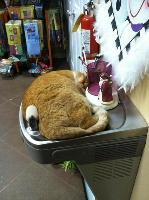 あらゆる容器に流れ込む猫技「液体流動の術」の写真