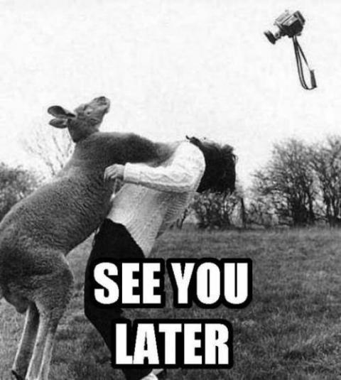 マジで馬鹿にできないカンガルーのパワー写真
